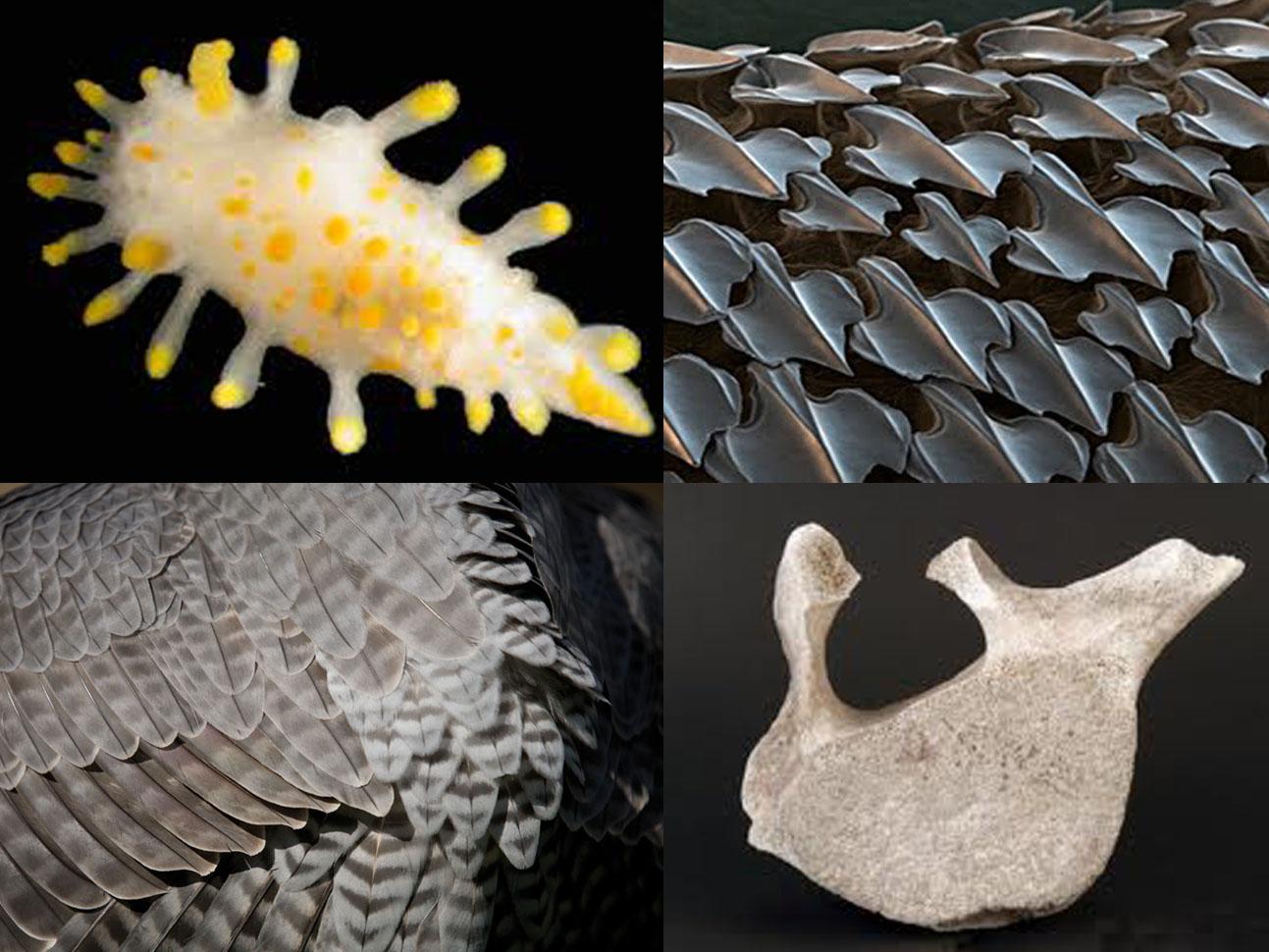 Molluske, Haihaut, Gefieder, Walknochen